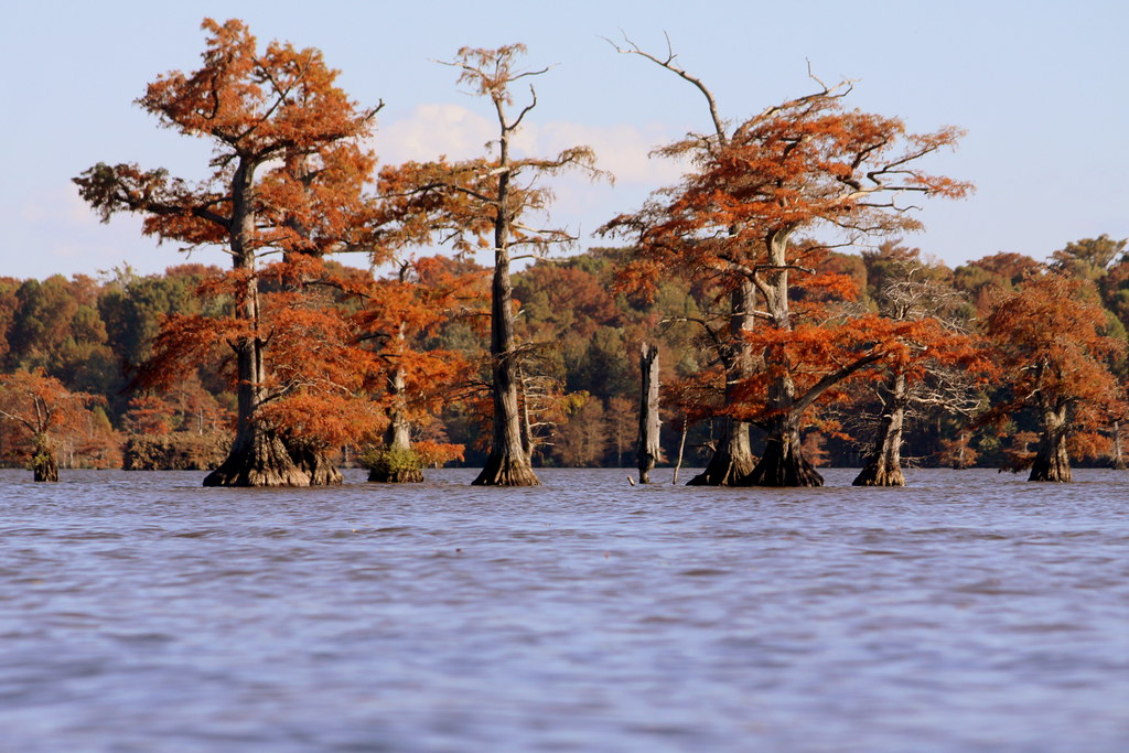 reelfoot lake in autumn reelfoot lake is a shallow