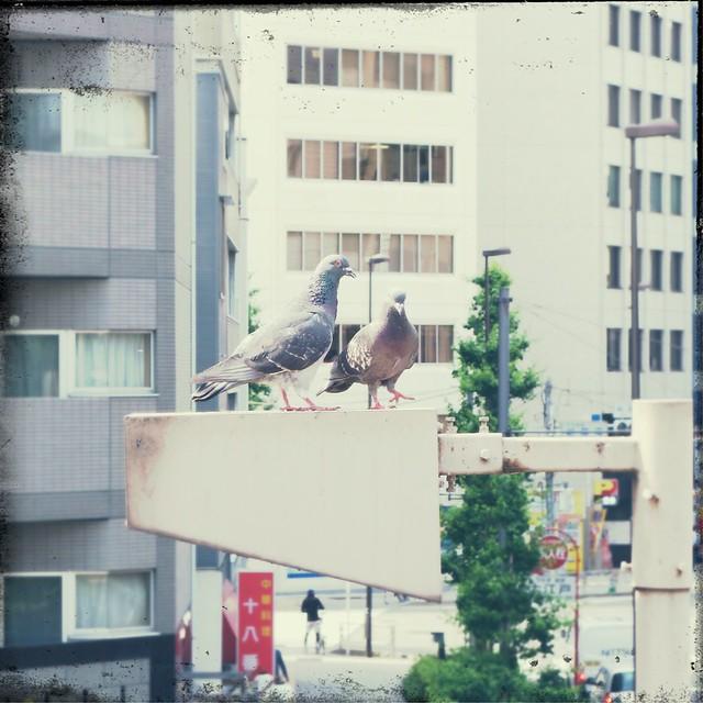 Pigeons on street light