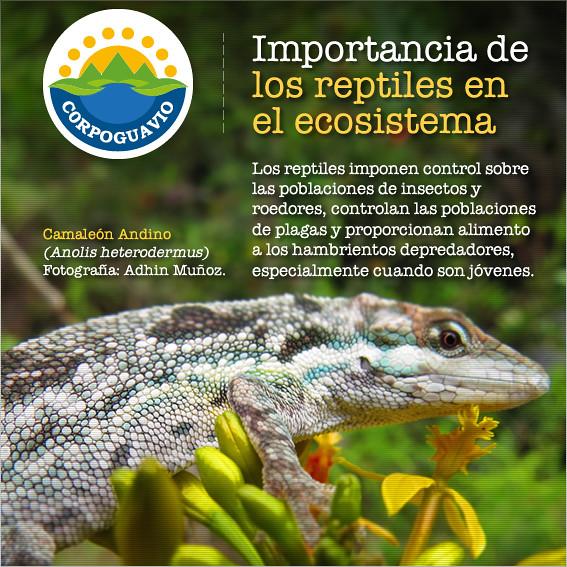 Importancia de los reptiles en el ecosistema los for Importancia de los viveros forestales