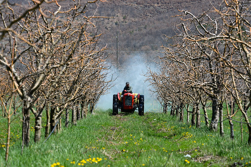 Farmers in Prespa reduced the use of pesticides by 30 percent each season since 2005 | by UNDP in Europe and Central Asia