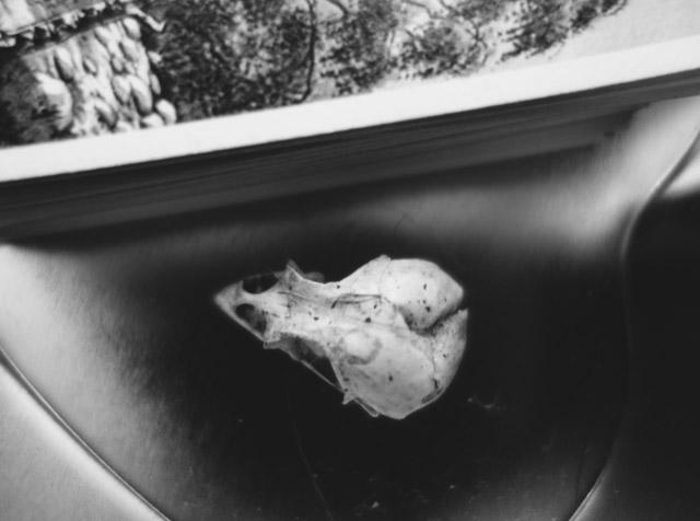 bird skull and tree cards