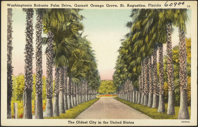 Orange Grove Palm Beach Fl