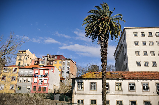 taken from Jardim das Virtudes (Porto, Portugal)