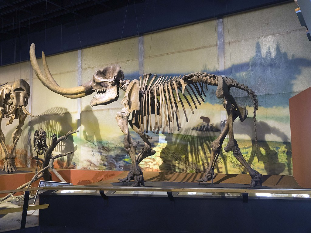 The Cleveland Museum Of Natural History Jobs