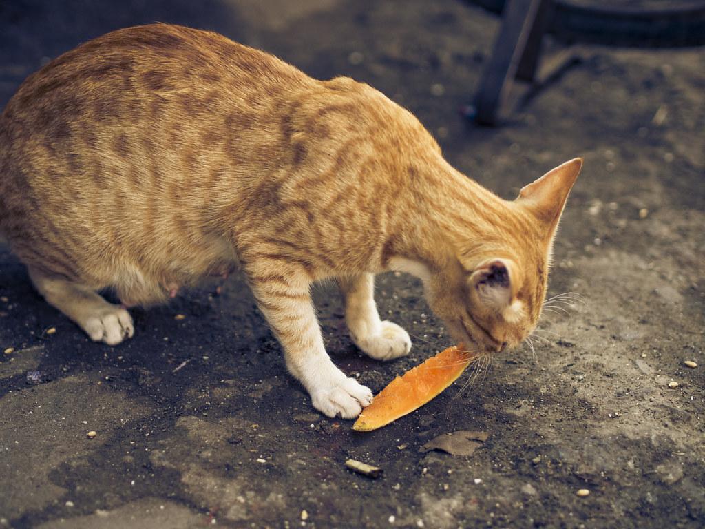 Hungry Cat | Chor Bazar, Mumbai, India One of the street ...