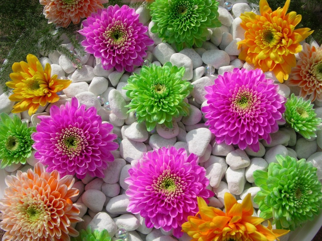 Beautiful Natural Flowers Wallpapers Beautiful Nature Flowers