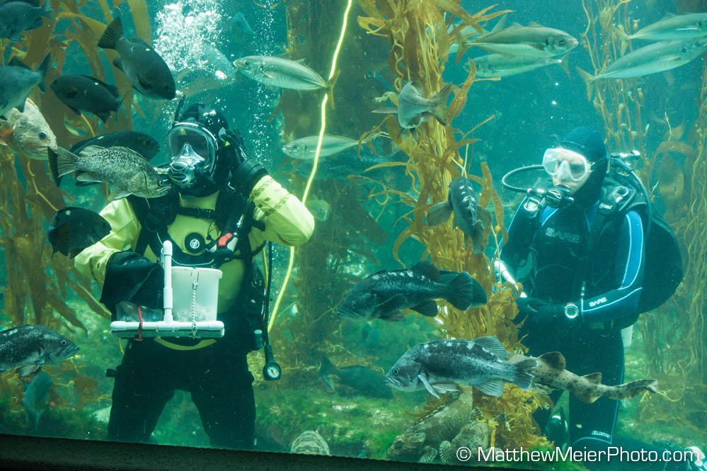 Image Result For Birch Aquarium Jobs