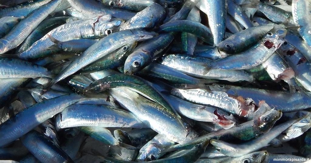 Catania Pesce