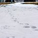 Day 12.1 - CY365 - Footprints