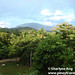 View of Mount Guiting-Guiting from Sanctuary Garden Resort in Magdiwang, Sibuyan
