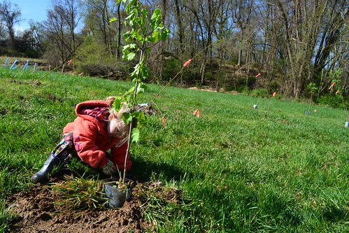 Photo of child planting a tree seedling