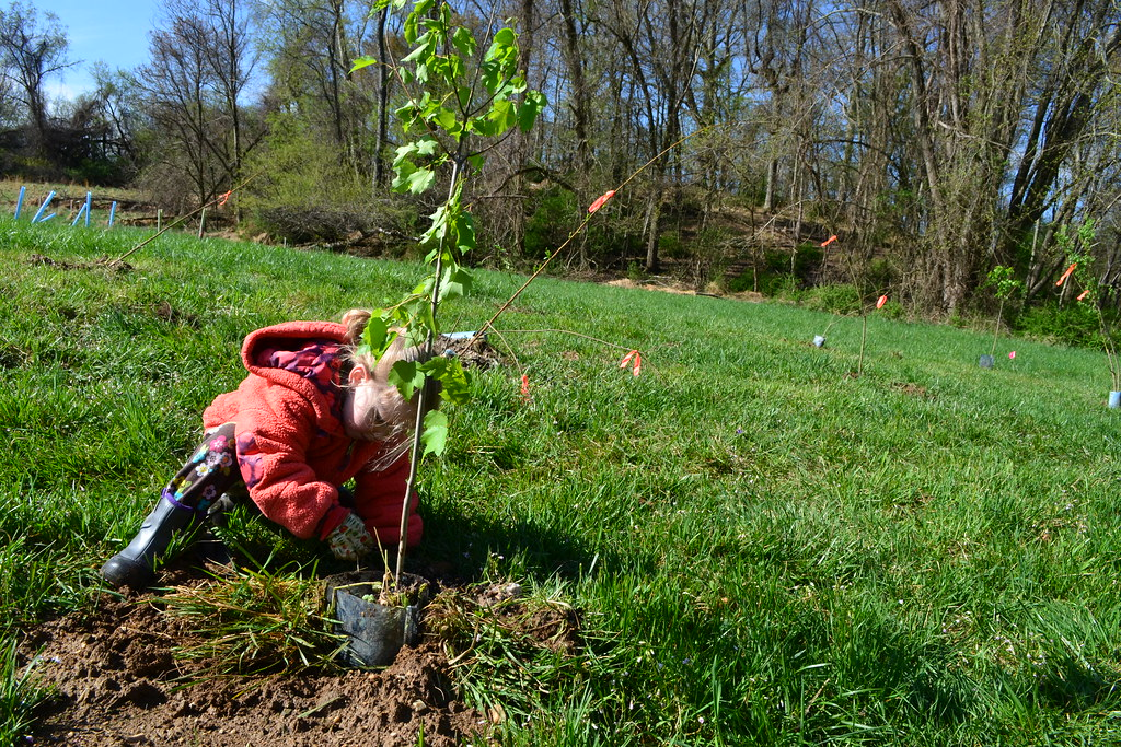 Photo of a tree planting