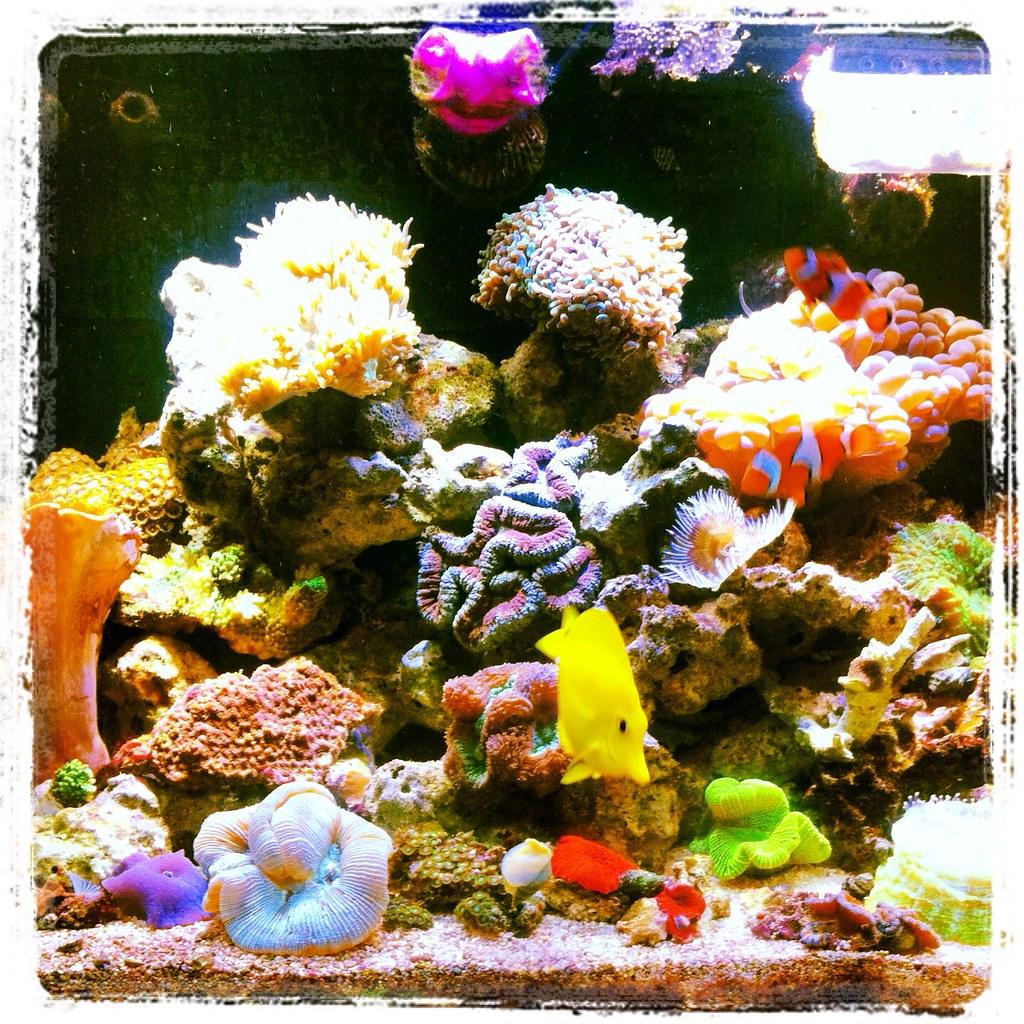 red sea max 130 reef aquarium red sea max 96w led. Black Bedroom Furniture Sets. Home Design Ideas