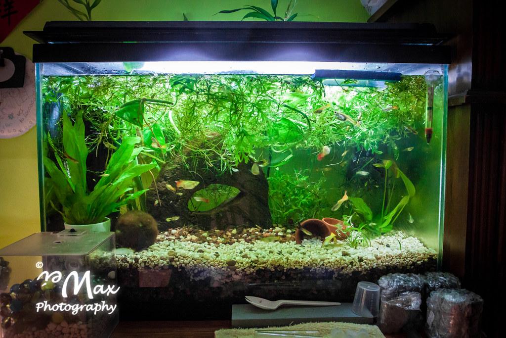 30 Gallon Planted Aquarium
