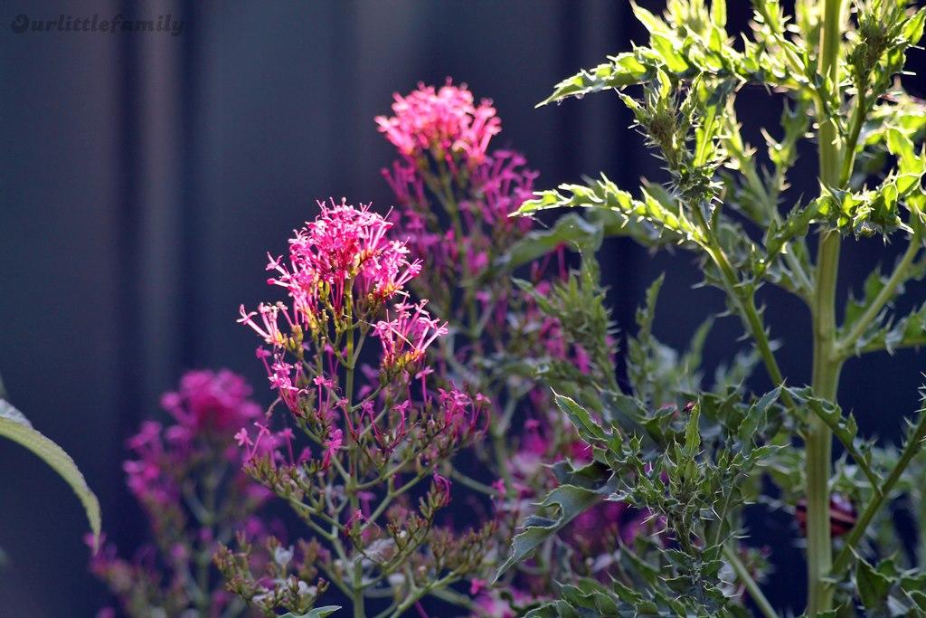 mon jardin 20