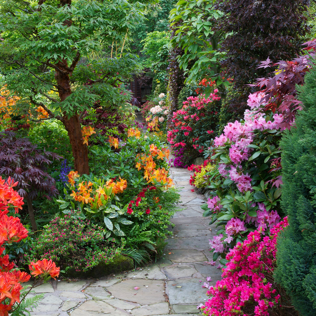 Path Through The Azalea And Rhododendron Flowers Four