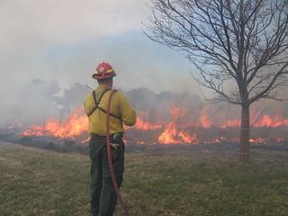 Wildland Firefighter