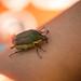 QI on Beetle Watch