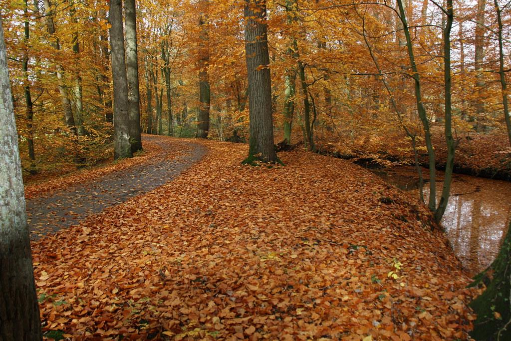 Herfst foto u0026#39;s   Herman Kuipers Hengelo   RTV Oost   Flickr