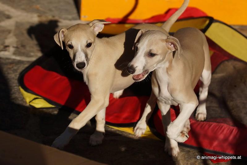 Tanga und Sookie, ich kann verstehen, dass Florian sich schwer tat bei der Entscheidung!