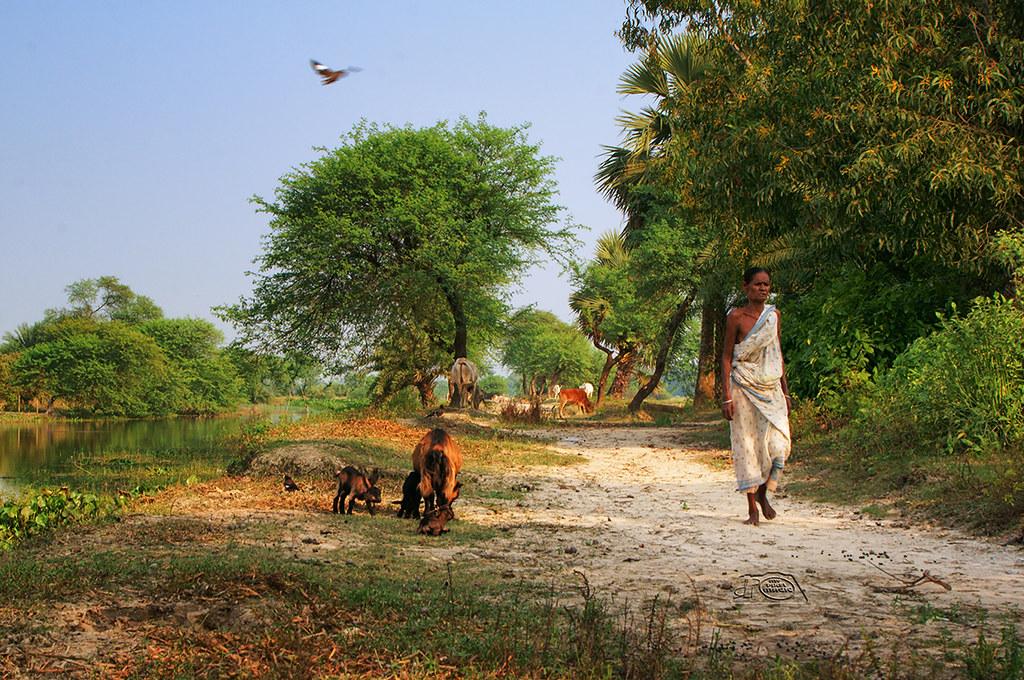 Gram Bangla (Village Of Bengal) | Partha Roy | Flickr