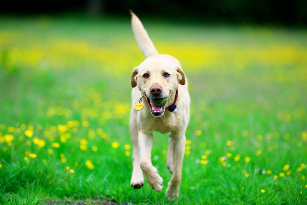 Pro Dog Training Davie