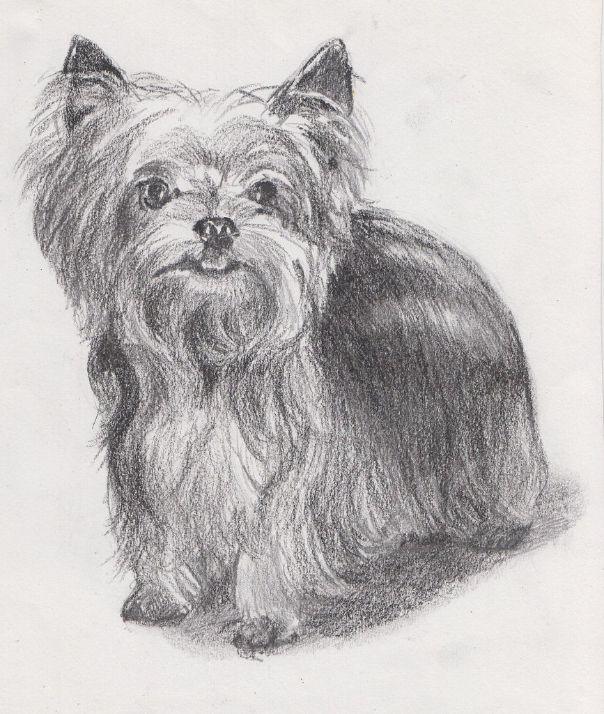Line Drawing Of Yorkshire Terrier : Yorkie line drawing imgkid the image kid has it
