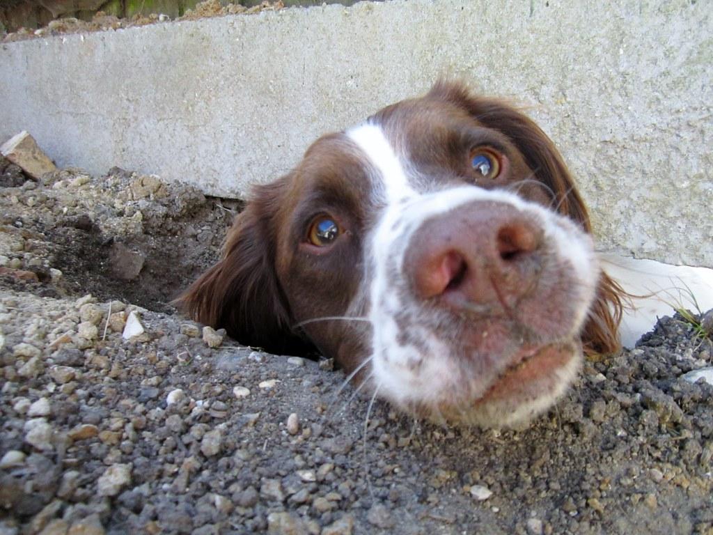 Dog Digging Under Fence Twitter Blog Facebook Flickr