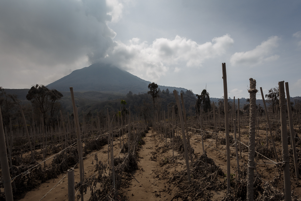 Erupsi Gunung Sinabung dan Dampaknya dilingkungan sekitar
