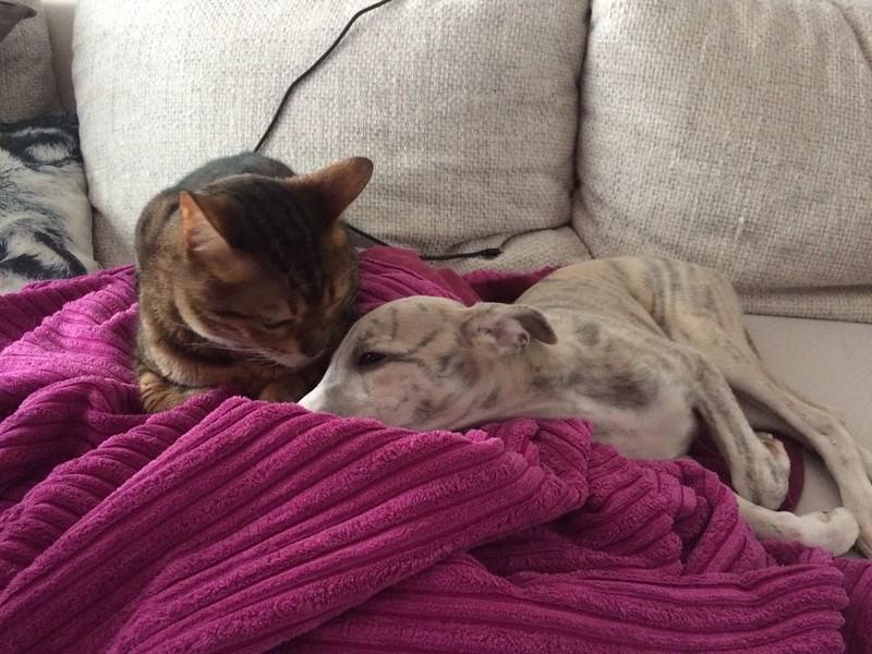 Und ich habe auch 2 eigene Katzen! Na, Animagiziehfrauli, bist du mir neidig?