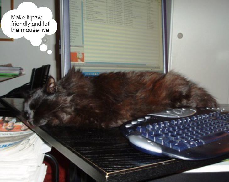 Nera, the computer cat