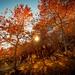 Feuillages d'automne en Chartreuse