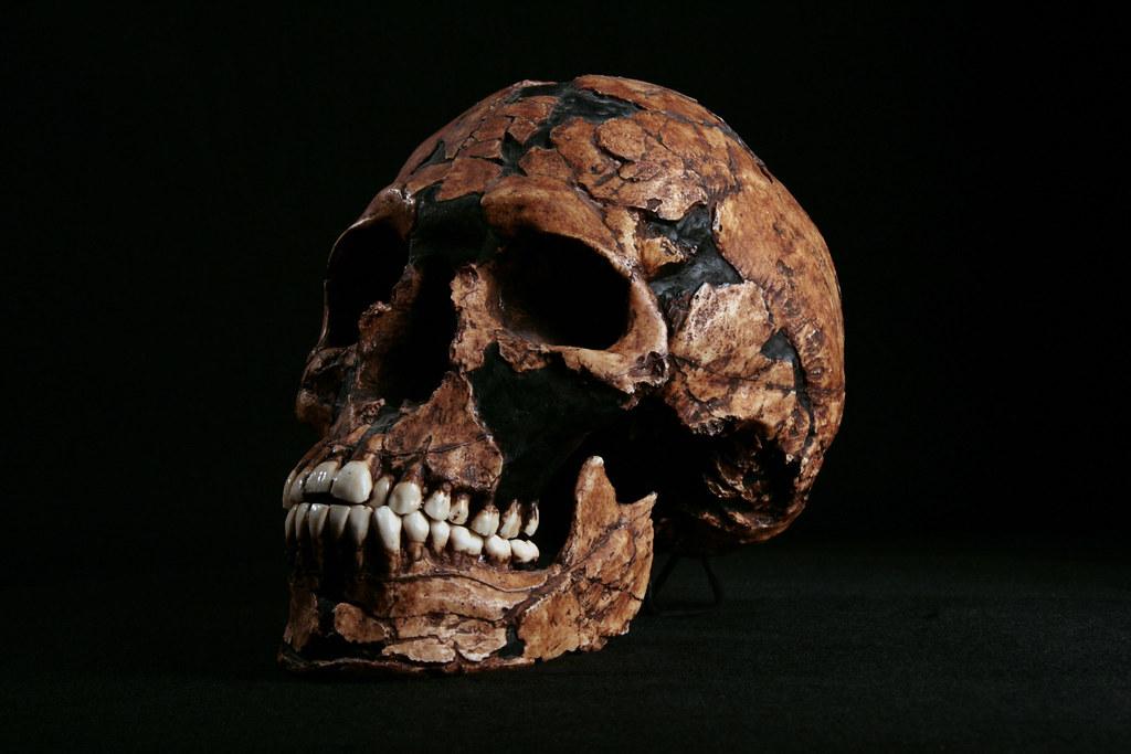 Hominid_Skull-Homo_sapiens_Qafzeh_9_005.jpg | To view this s… | Flickr