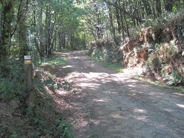 Pista Forestal en la Ruta das Carballeiras en Val do Dubra