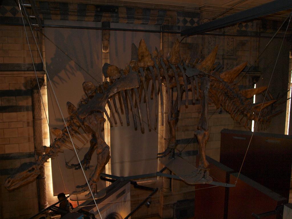 British Natural History Museum Jobs