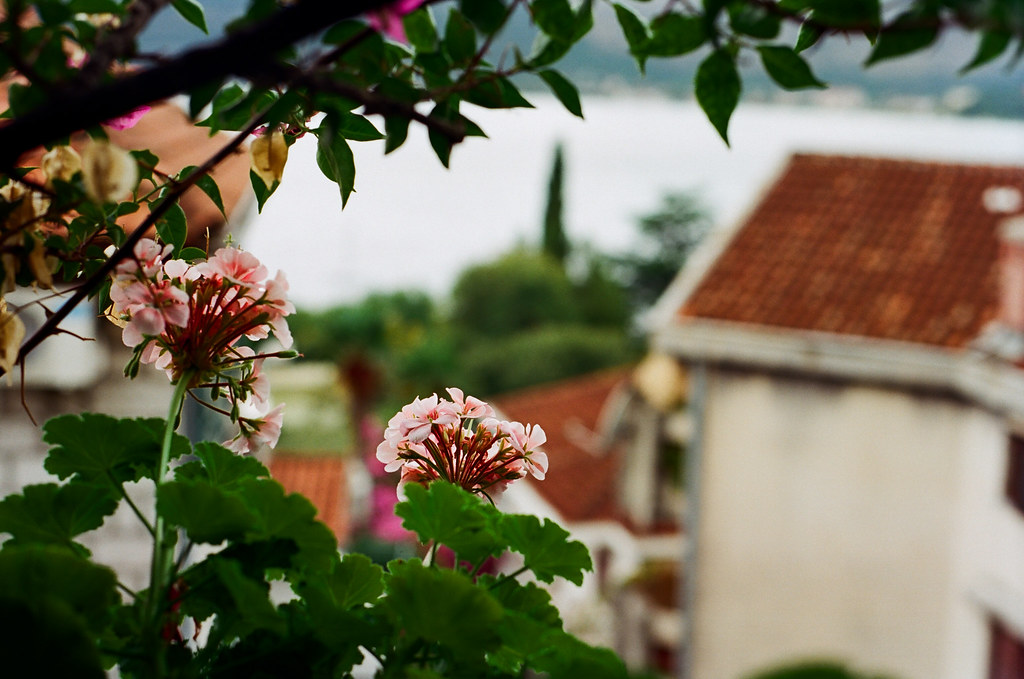 Lush Montenegro