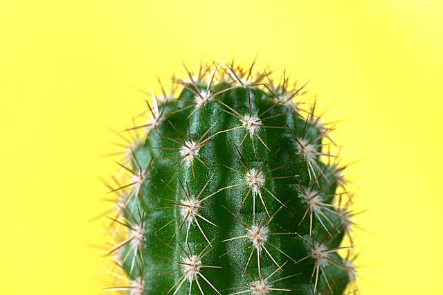 Cactus IMG_8381
