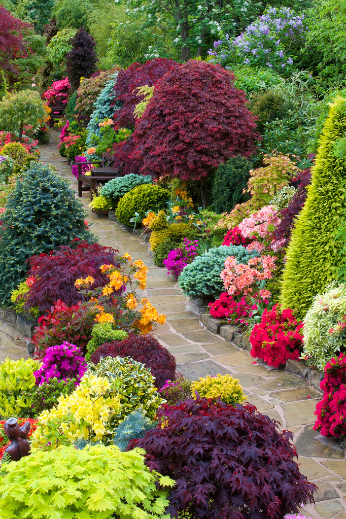 Path through the colours of late spring the azalea for Gardening 4 all seasons