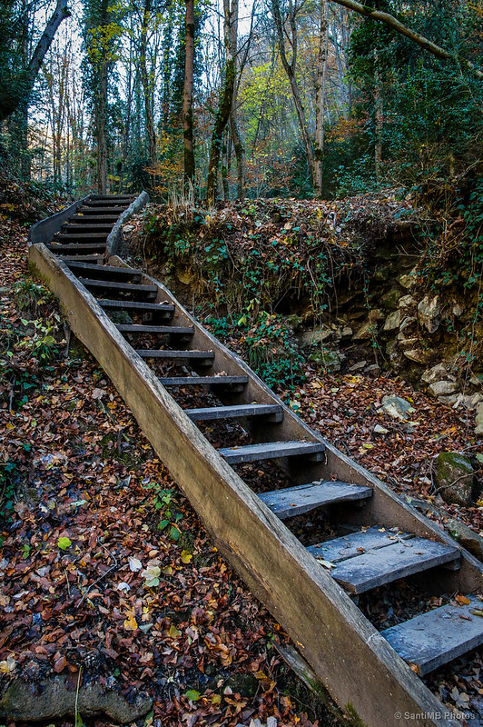 Las escaleras del bosque.