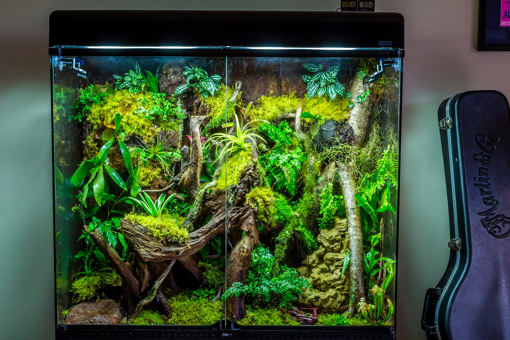Rainforest Vivarium This Is Our Enclosure For Our