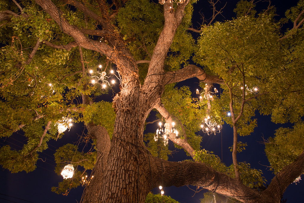 Chandelier Tree.   nshtnnrng   Flickr