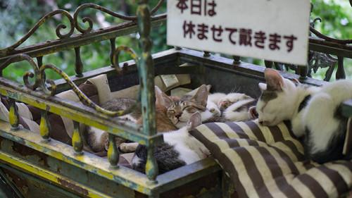 数え切れないほどの猫たち @ 哲学の道