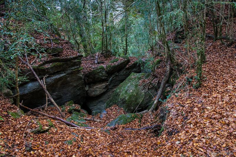 Rocas y agujeros en el bosque
