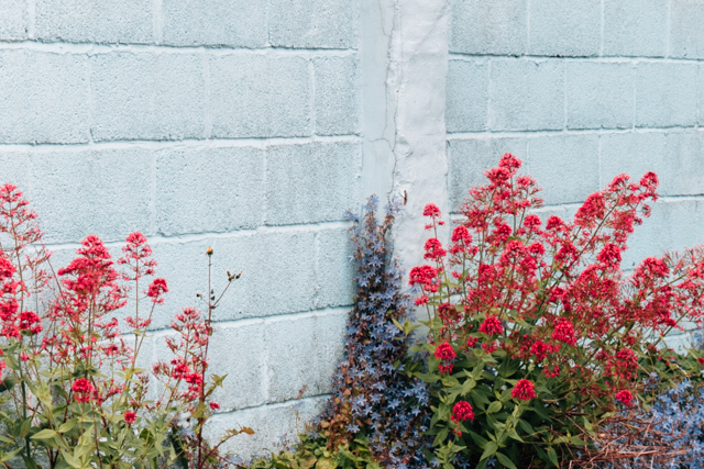 pale blue wall with flowers