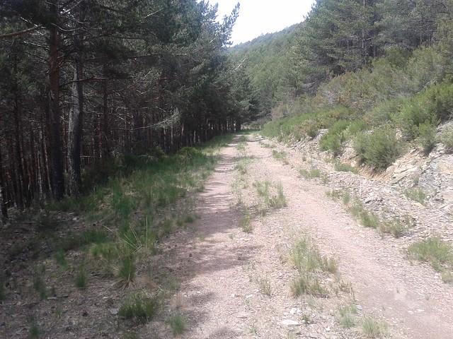 Pista Forestal en la Ruta da Ortiga - O Invernadeiro
