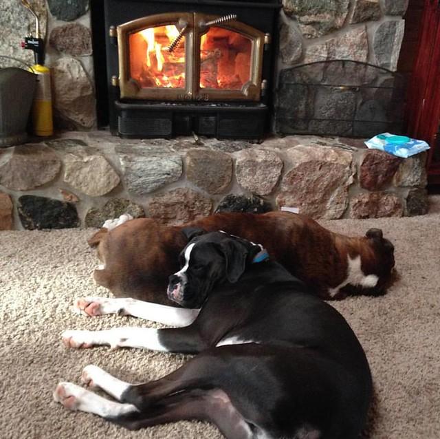Dexter & Jasper