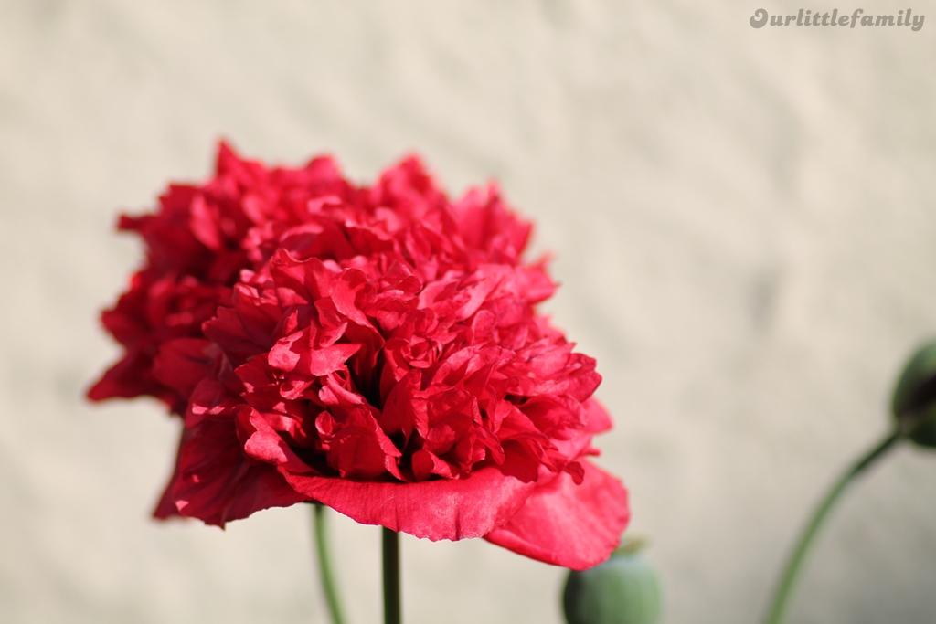 mon jardin 13