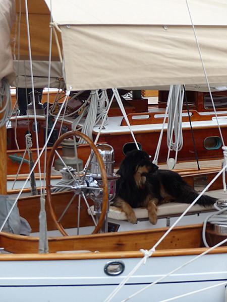 chien marin