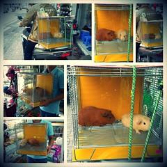 Khách  www.hamstermiendathua.vn