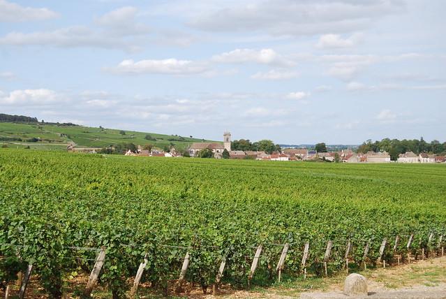Wijngaarden van Pommard...